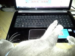 blu monster hogging the keyboard, fred monster blocking the rear fan