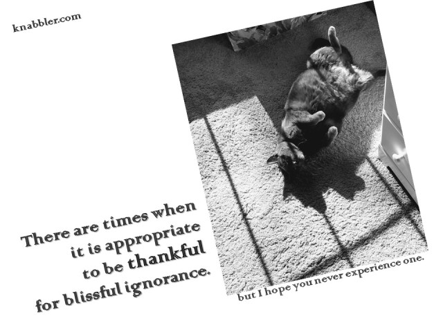 2019 11 26 There are times when it is appropriate to be thankful jakorte