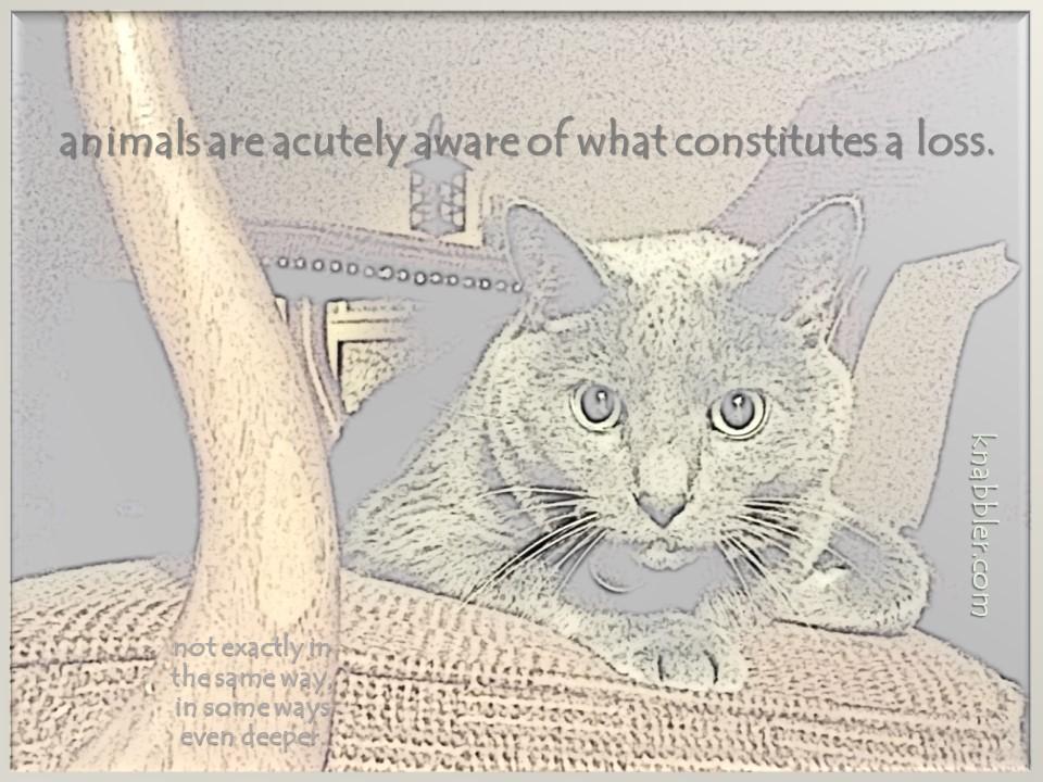 2020 01 28 animals are acutely aware jakorte